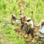 Importancia del agro en la economía