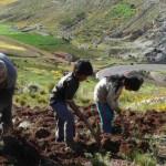 La fuerza de trabajo en el campo colombiano
