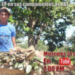 Las FARC-EP en sus campamentos de paz